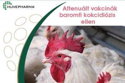 vény nélküli antibiotikum