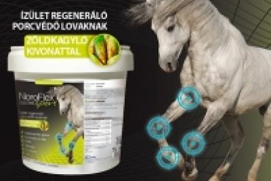 Lovaink ízületeinek védelmére: Noroflex Equine Sport